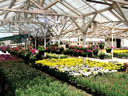 Flowers in a greenhouse - Green Indrustry Point of Sale