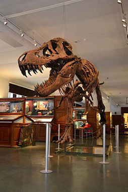 Large T-Rex statue in a museum